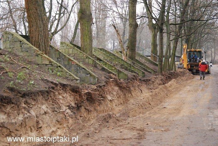 Park Skaryszewski – uszkodzone drzewa